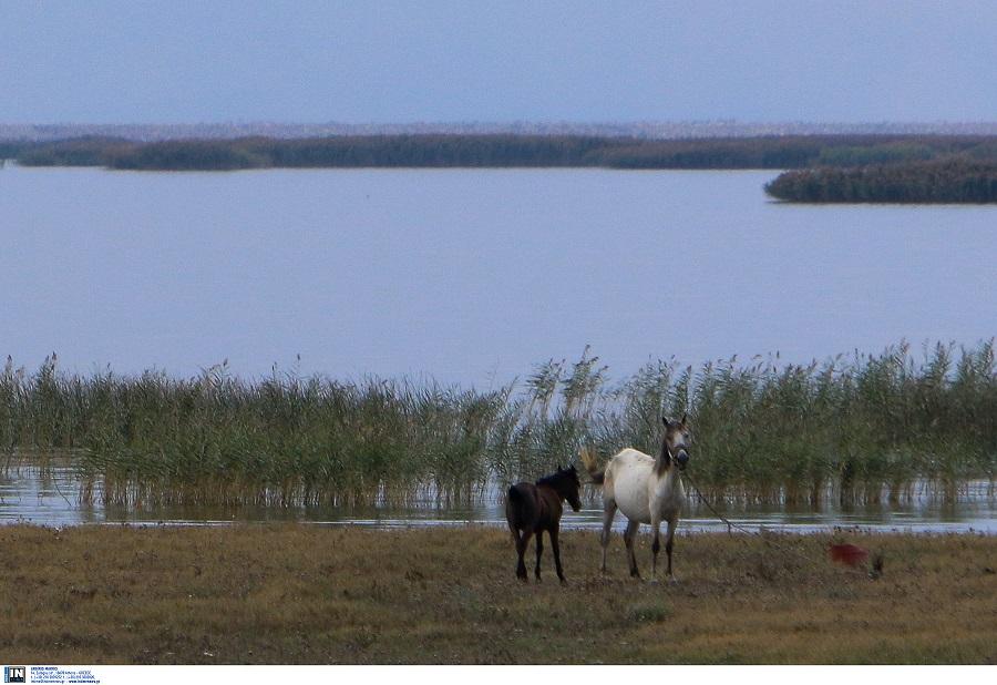 Πυροβόλησαν και σκότωσαν άγρια άλογα στον Έβρο (ΦΩΤΟ)