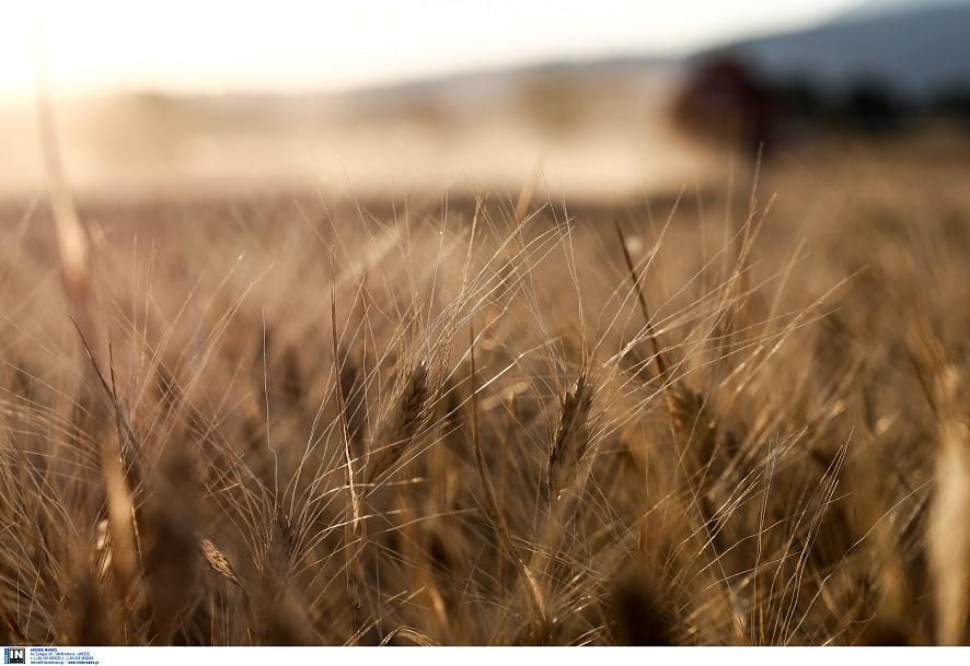 Εφαρμογές της νανοτεχνολογίας στη γεωργική παραγωγή