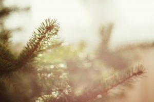 Το πρώτο Χριστουγεννιάτικο δέντρο της Ελλάδας στον Ταξιάρχη Χαλκιδικής