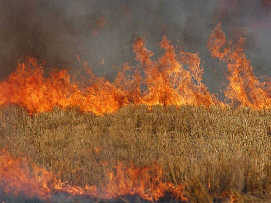 Φωτιά στην Καλλικράτεια Χαλκιδικής