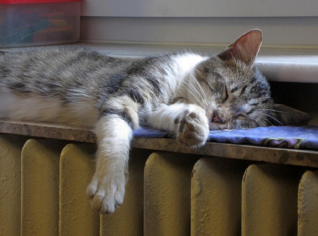 Φολέγανδρος: Μαθητές κλωτσούν μέχρι θανάτου γάτα (VIDEO)