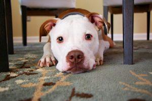 Θεσσαλονίκη: Σκυλιά «πορτιέρηδες» στα Λαδάδικα – Τι απαντά το μαγαζί (ΦΩΤΟ)