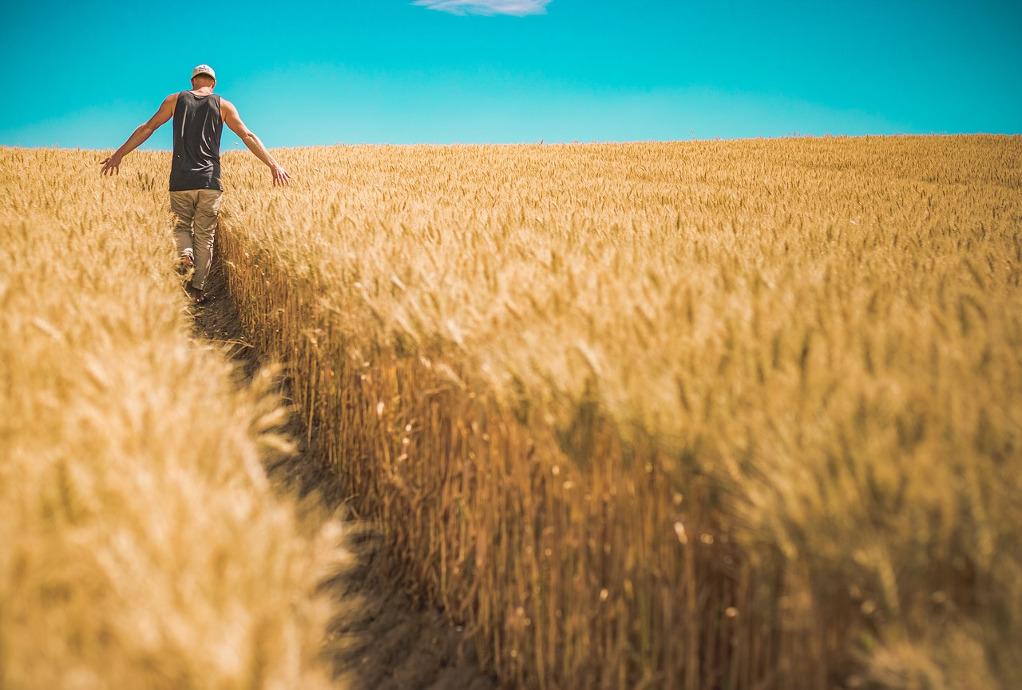 Σύγχρονες πρακτικές της διοίκησης εφοδιαστικής αλυσίδας στον αγροδιατροφικό τομέα