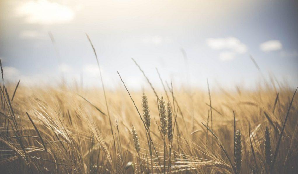 Έρχονται αυξήσεις φόρου στα αγροτεμάχια