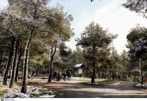 Η ΠΚΜ φύτευσε βραδυφλεγή φυτά για την πυροπροστασία του Σέιχ Σου (ΦΩΤΟ)
