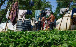 Υπ. Αγροτικής Ανάπτυξης: Πλήρης νομιμότητα στο καθεστώς εργασίας των αλλοδαπών εργατών γης