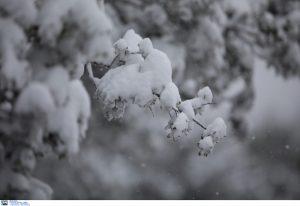 Κακοκαιρία- Εύβοια: Χωρίς ρεύμα με πολύ χιόνι