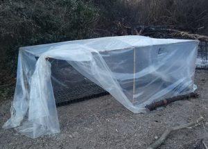 Εντοπίστηκε φυτεία δενδρυλλίων κάνναβης στη Λακωνία (ΦΩΤΟ)