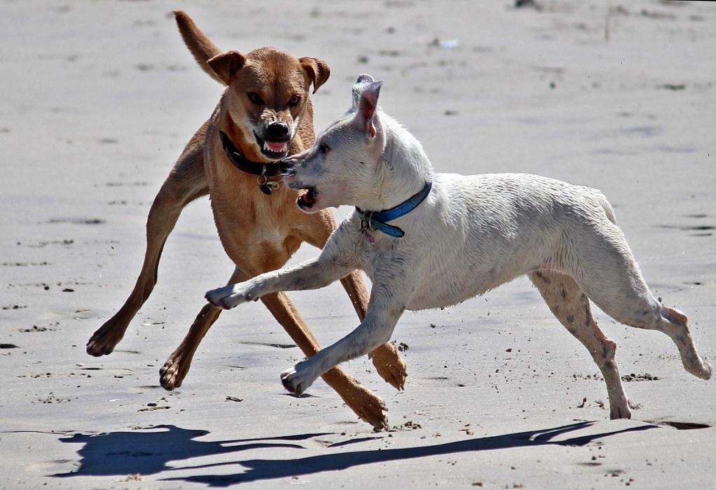 Κακοποίηση σκυλιών σε χώρο του Δήμου Σπάρτης καταγγέλλουν οι ζωόφιλοι (VIDEO)