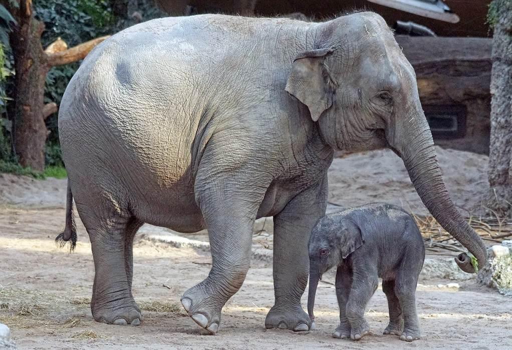 Γερμανία: Γεννητούρια στο ζωολογικό κήπο του Βούπερταλ (ΦΩΤΟ)