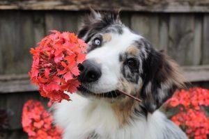 Σκυλιά: Μπορούν να μας θωρακίσουν από την σχιζοφρένεια;
