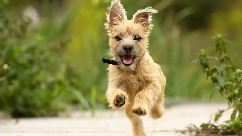 Κρήτη: Την δάγκωσε ο σκύλος του γείτονα