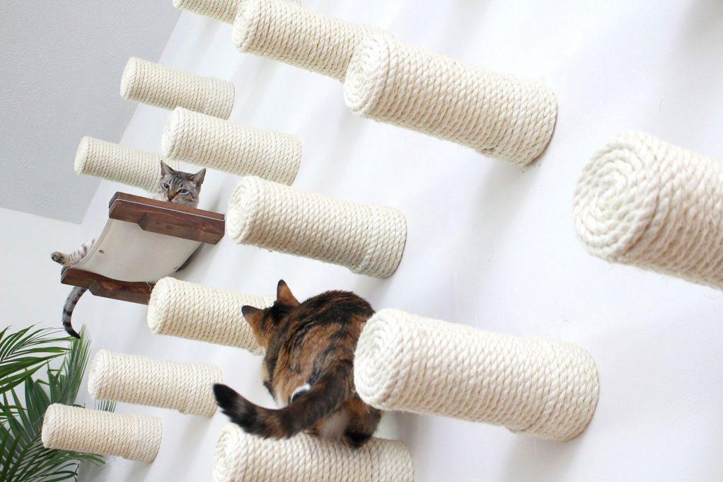 Ένας «παιδότοπος» για γάτες (ΦΩΤΟ)