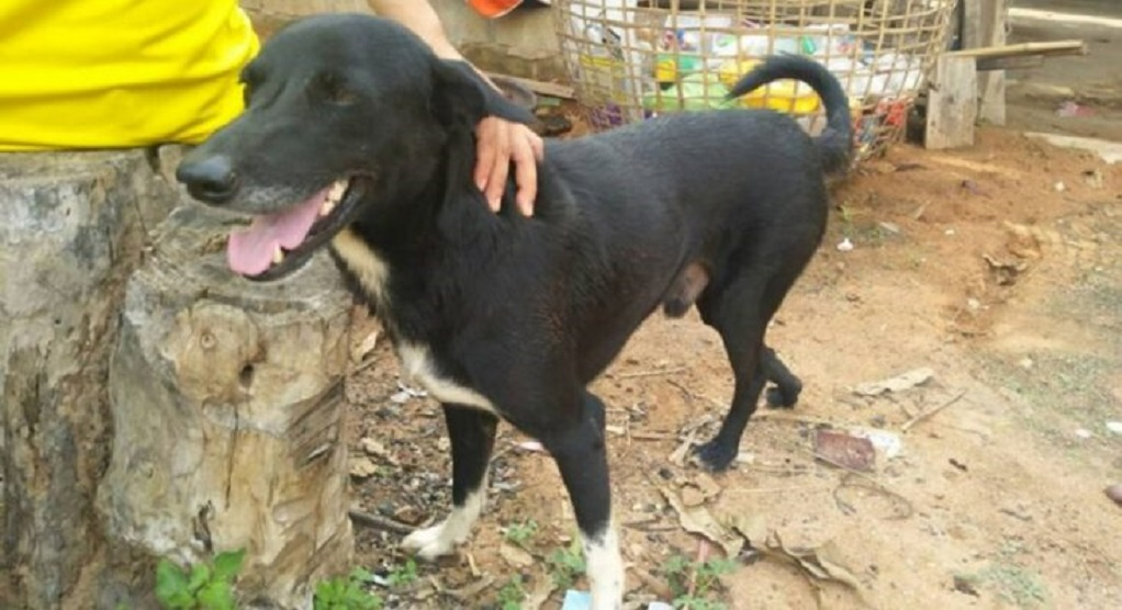 Ανάπηρος σκύλος έσωσε βρέφος που έθαψαν ζωντανό