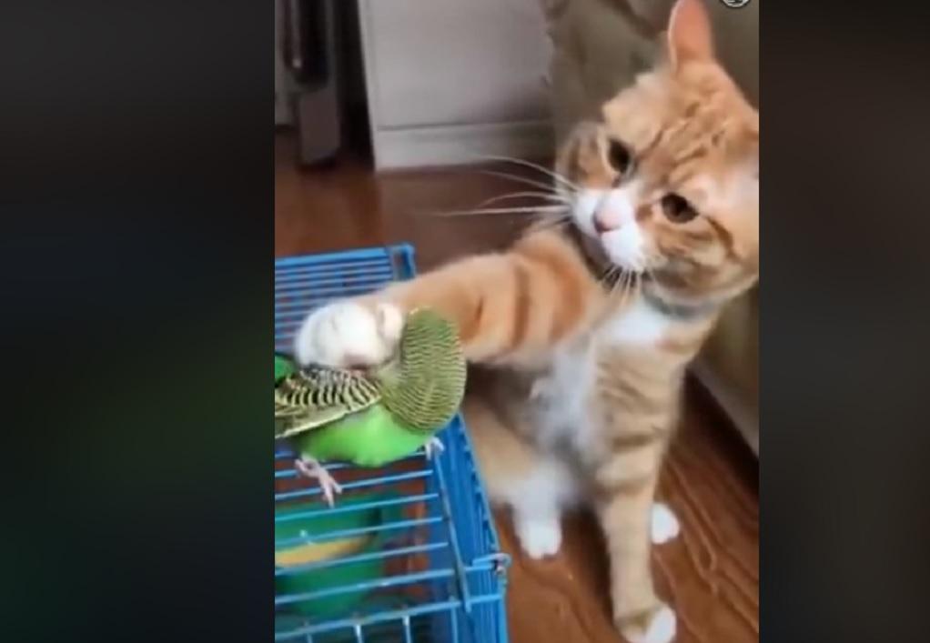 Viral: Το τρυφερό χάδι της γάτας στο παπαγαλάκι (VIDEO)