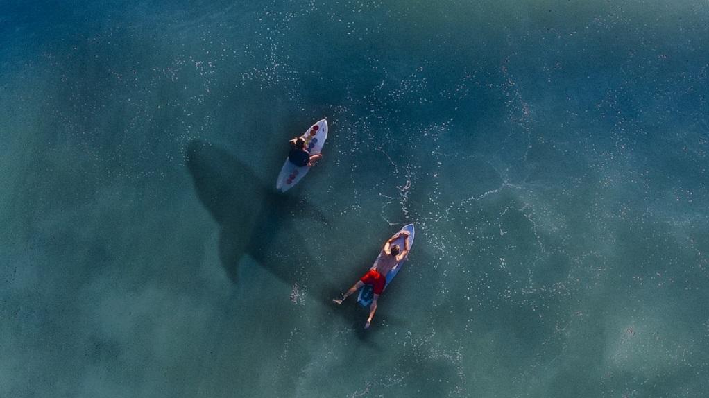 Πιο φονικές οι selfies… από τις επιθέσεις καρχαριών
