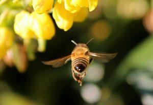 Τι πρέπει να κάνετε για τσίμπημα από μέλισσα ή σφήκα