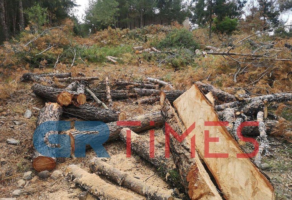 Σέιχ Σου- Εντατικές εργασίες απομάκρυνσης των προσβεβλημένων δένδρων