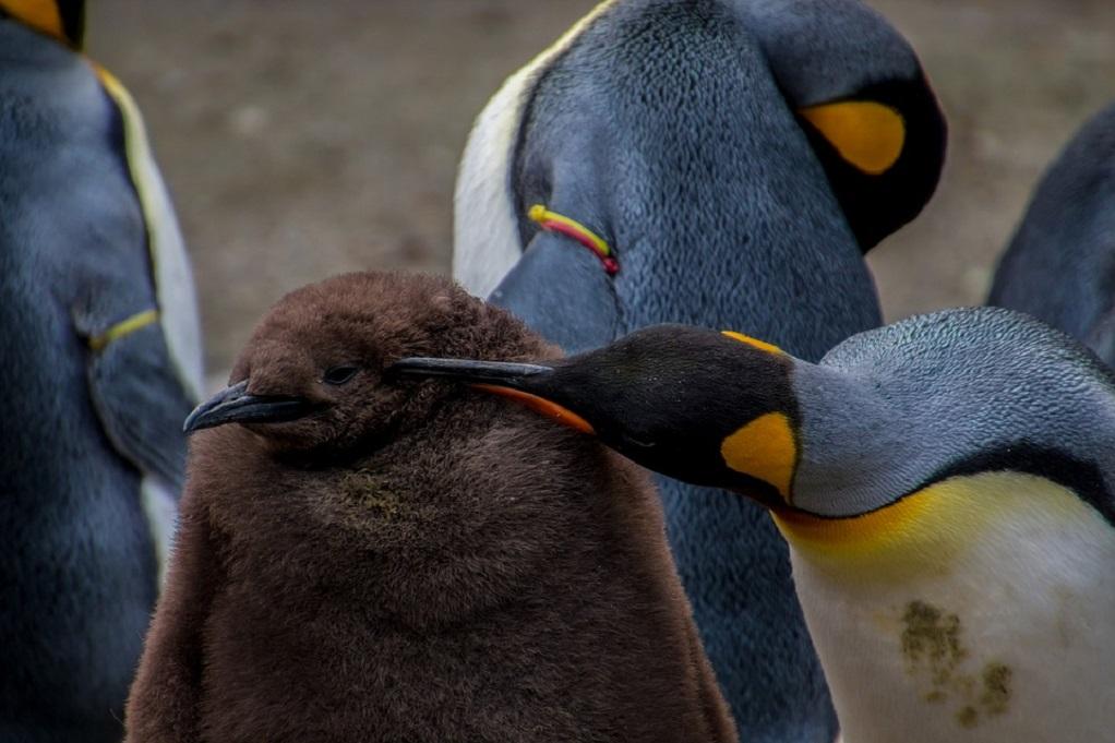 Πιγκουίνοι «διέρρηξαν» κατάστημα με σούσι