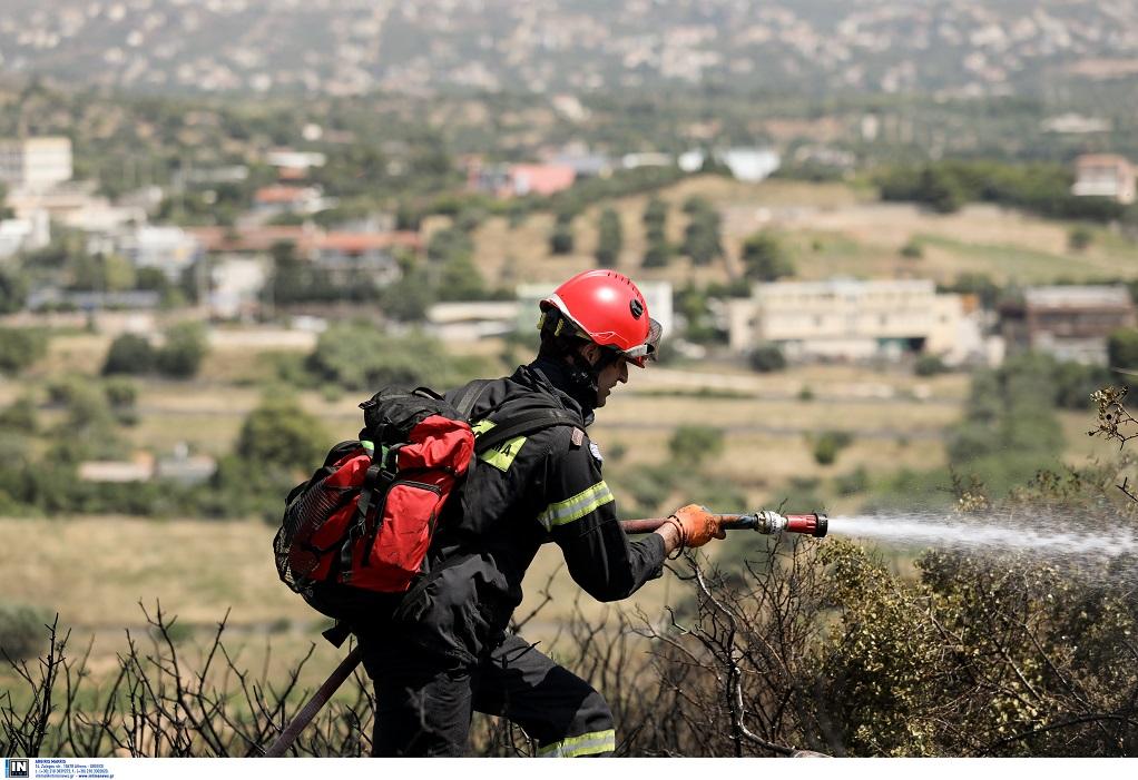 Φωτιά σε δασική έκταση στη Μαγνησία
