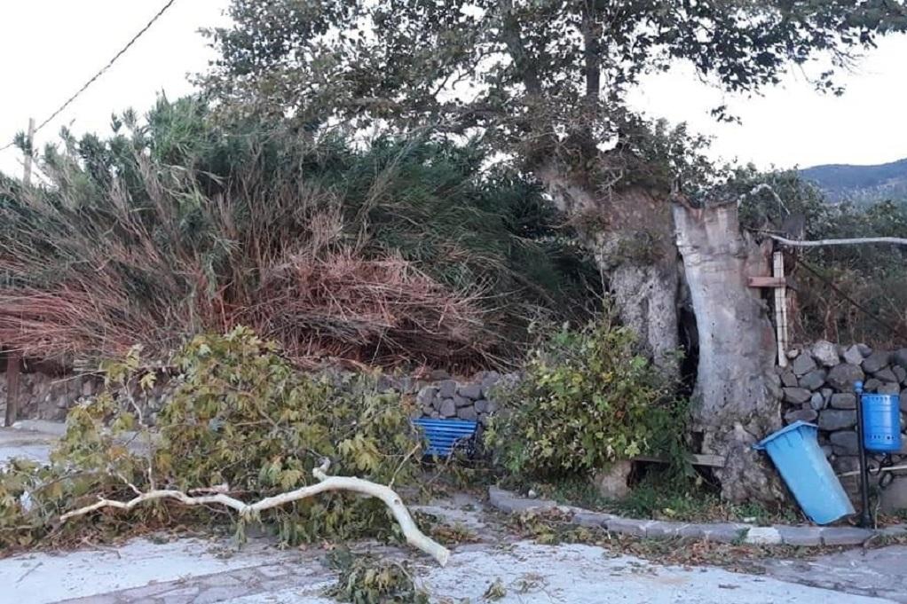 Μυτιλήνη: «Έπεσε» το δένδρο σύμβολο της προσφυγικής κρίσης (ΦΩΤΟ)