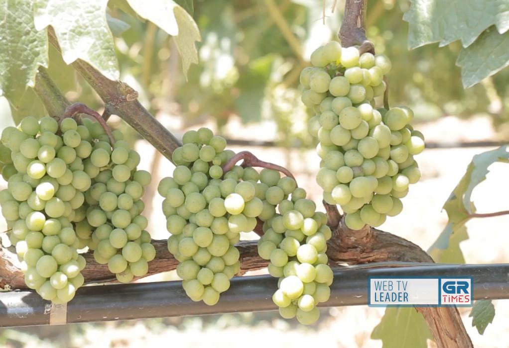 Κρασιά από τη Θεσσαλονίκη κάνουν διεθνή καριέρα