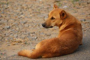 Πέλλα: Δηλητηρίασε αδέσποτα σκυλιά στην Αριδαία