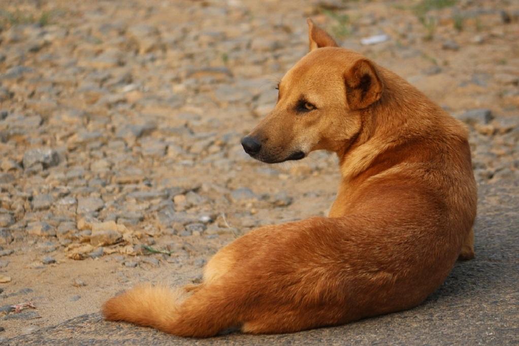 Κτηνωδία στην Φλώρινα – Δηλητηρίασαν 26 σκυλιά μέσα σε λίγες μέρες