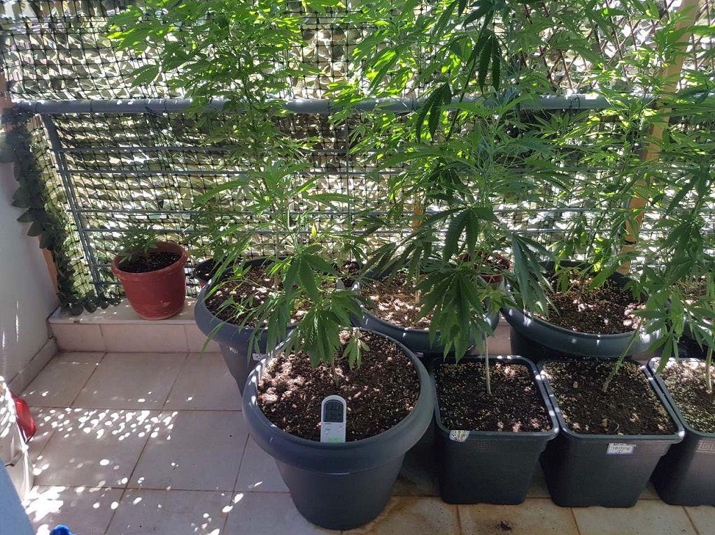 Θεσσαλονίκη: Καλλιεργούσε και εμπορεύονταν ναρκωτικά (ΦΩΤΟ)