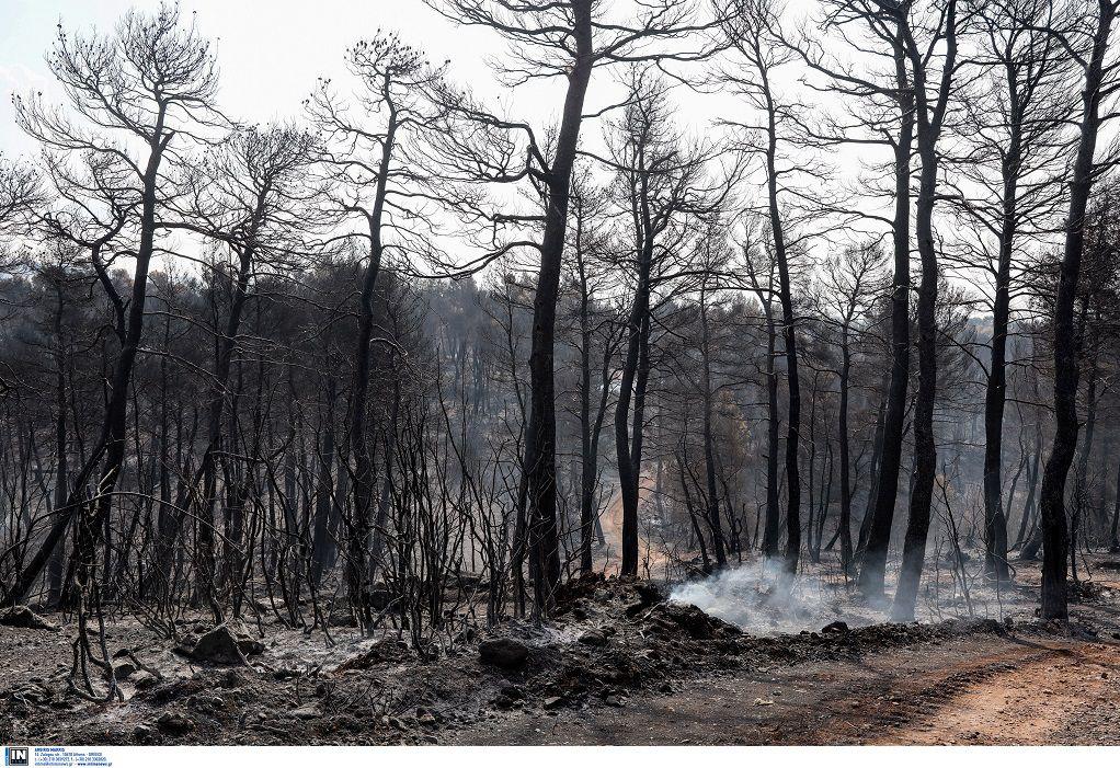 Εύβοια: Εντοπίστηκαν ευρήματα εμπρησμού – Οριοθετημένη η φωτιά (ΦΩΤΟ)