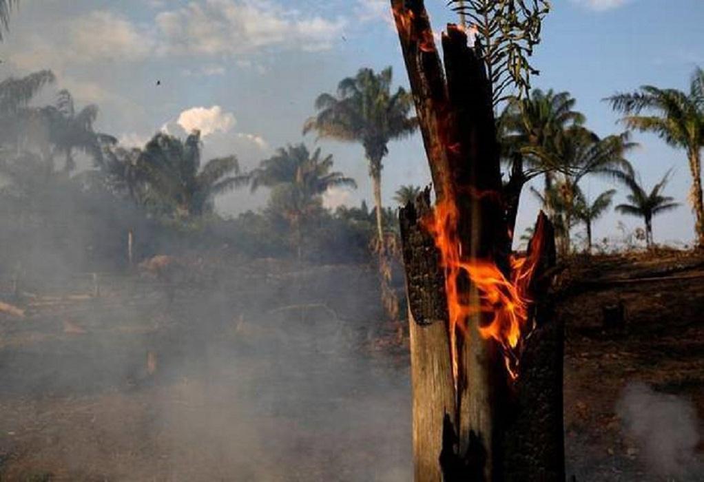 Το… βοδινό κρέας και η σόγια ευθύνονται για τις καταστροφές στον Αμαζόνιο