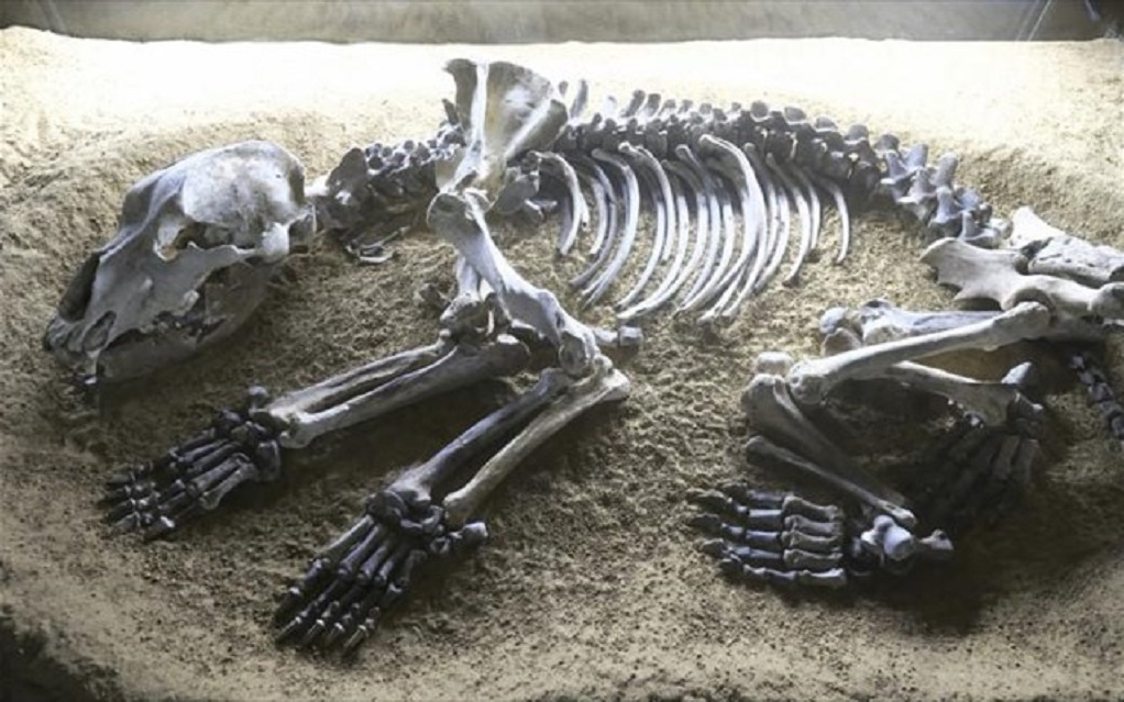 Homo sapiens – προϊστορικές αρκούδες: Η σκληρή μάχη για τα σπήλαια