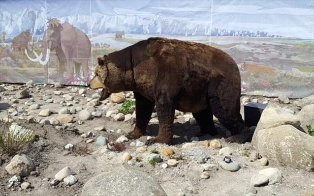 Αρκούδα βόλταρε στη Βλάστη Κοζάνης