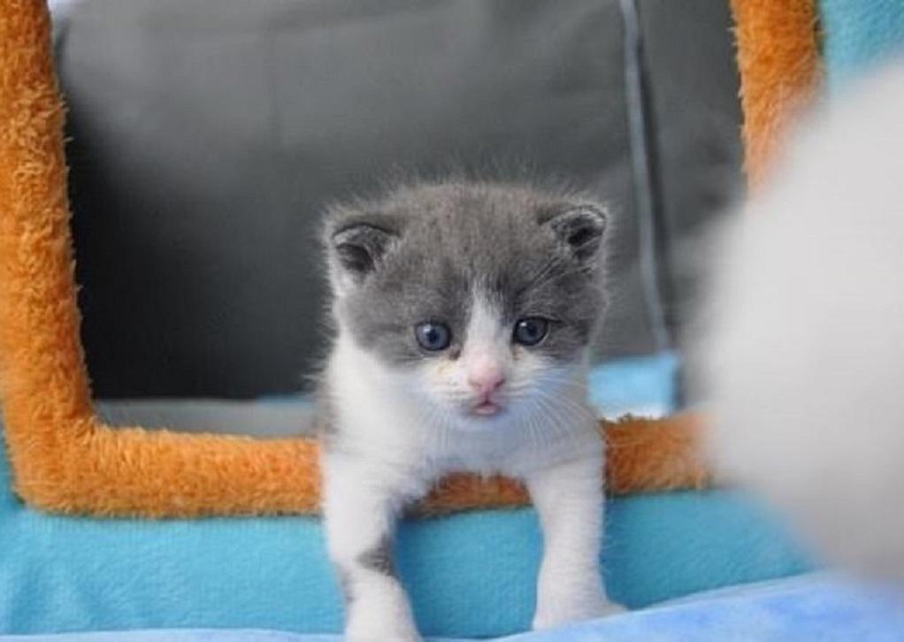 Κίνα: Εταιρεία κλωνοποιεί γάτες και σκύλους!
