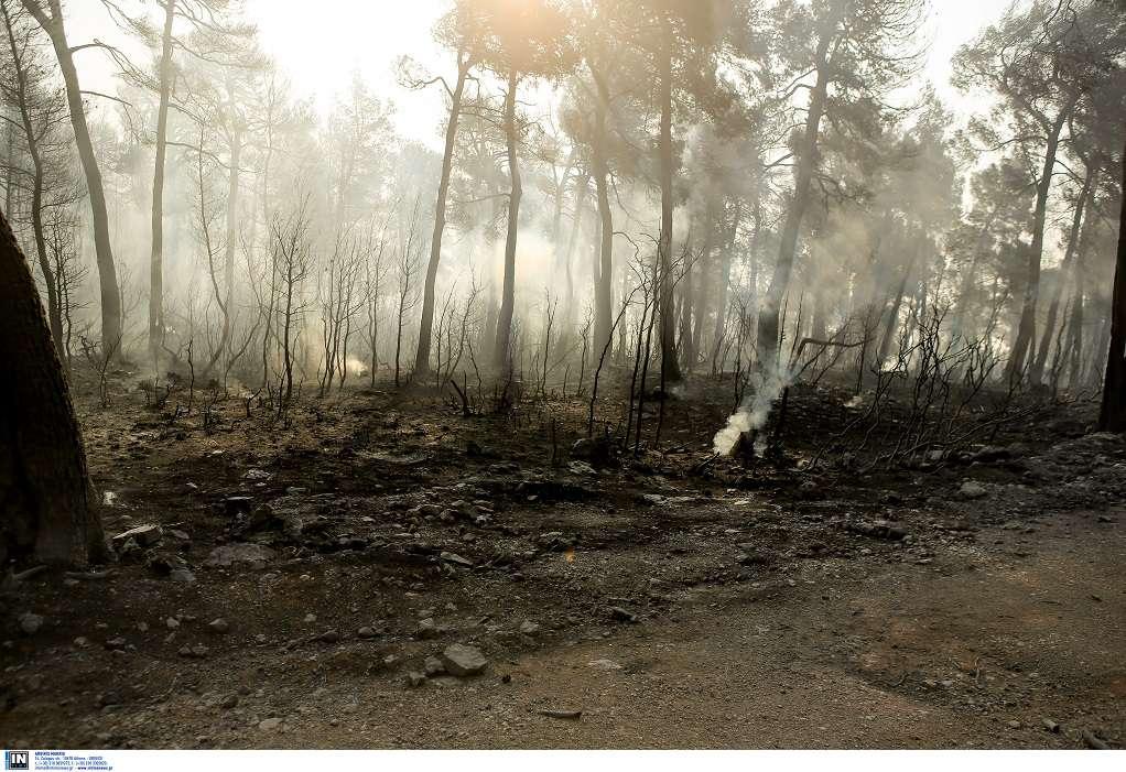 Εύβοια: Στάχτη και αποκαΐδια το πανέμορφο δάσος της Στενής που κάηκε (Φωτορεπορτάζ)