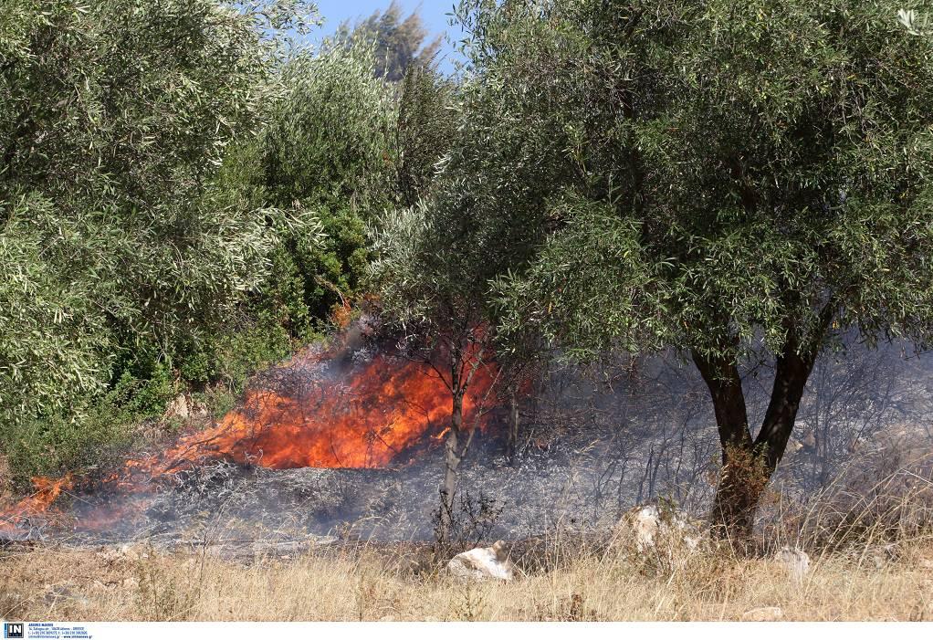 Σε μία ημέρα εκδηλώθηκαν 33 πυρκαγιές στη χώρα