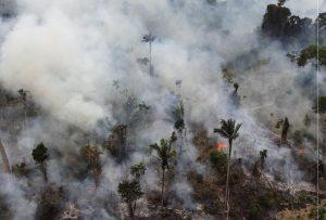 Βουλή: «Τεράστιο έγκλημα η καταστροφή των δασών του Αμαζονίου»
