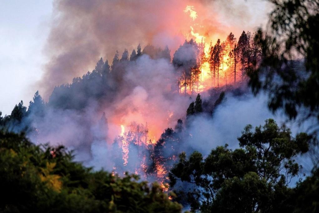 Κανάρια νησιά: 8.000 άνθρωποι απομακρύνθηκαν λόγω πυρκαγιάς (VIDEO)