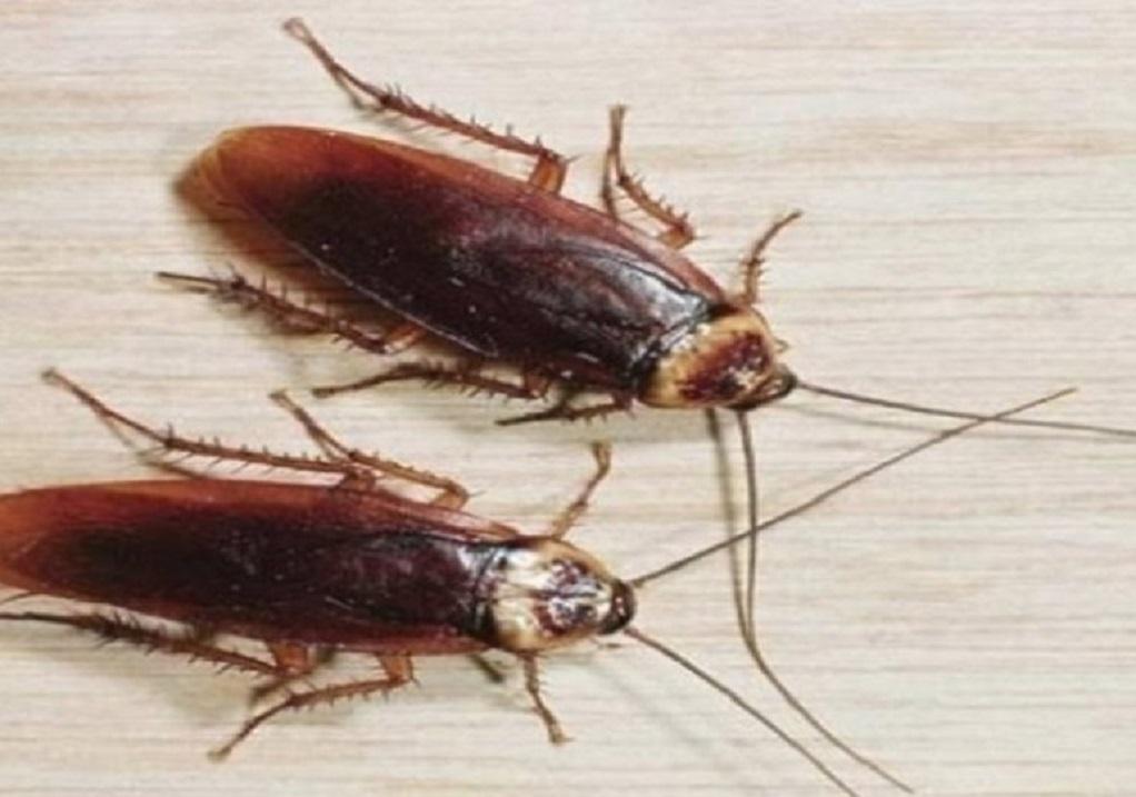 Φυσική παγίδα για τις κατσαρίδες στο σπίτι
