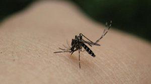 Θεσ/νίκη: Εκδήλωση για προστασία από τα κουνούπια