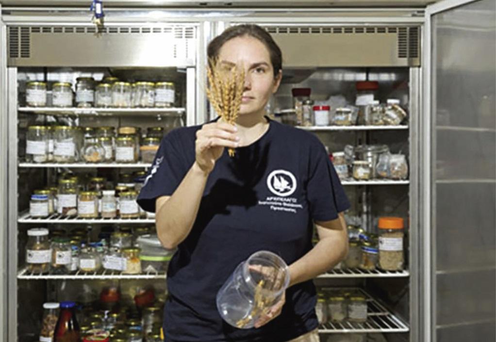 Τράπεζα Σπόρων Αιγαίου: Ανάχωμα στον διατροφικό εκβιασμό που θα δεχθούν τα παιδιά μας στο μέλλον