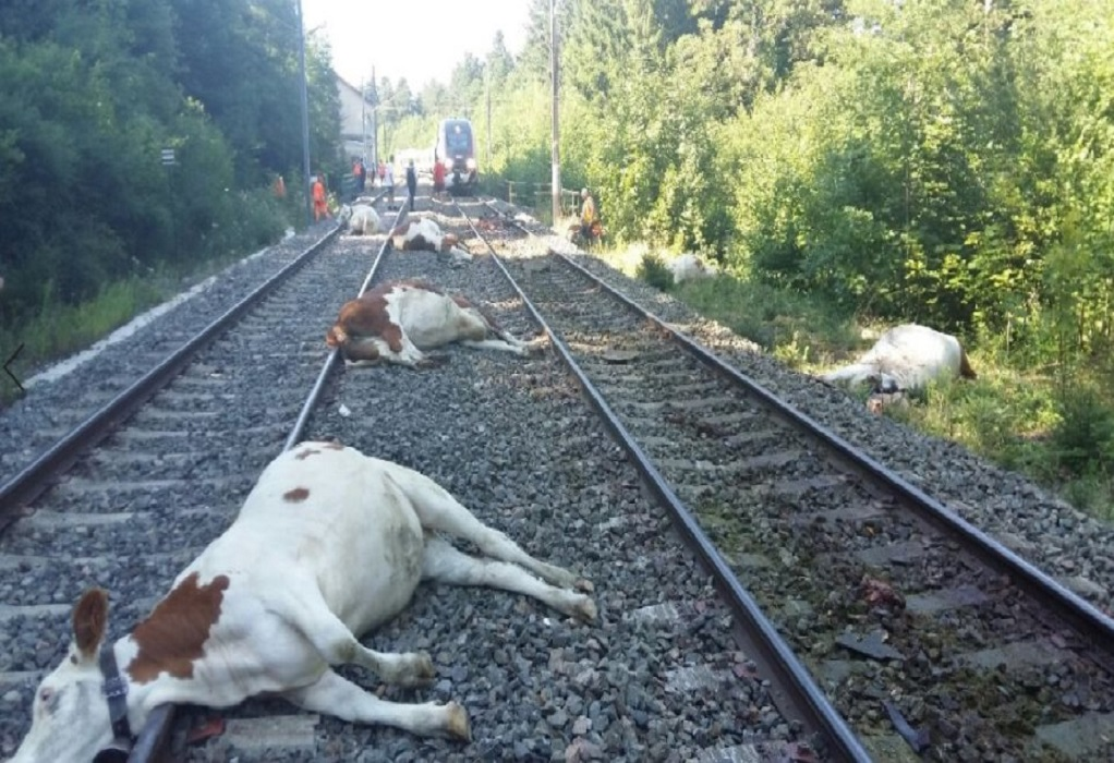 Τρένο χτύπησε με αγελάδες στην ανατολική Γαλλία
