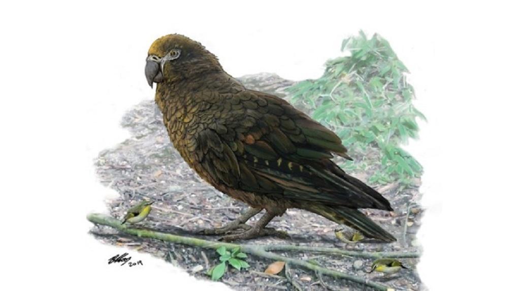 Ο μεγαλύτερος παπαγάλος που υπήρξε ποτέ στη Γη