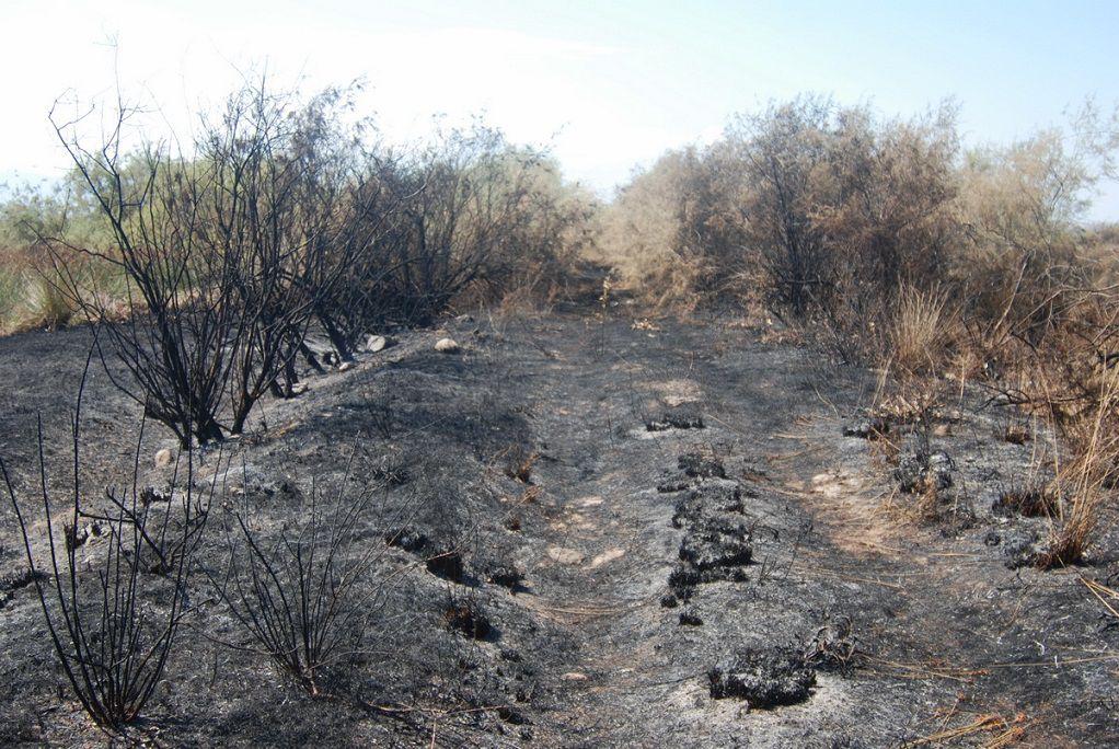 Θεσσαλονίκη-Πυρκαγιά στην Αλυκή Κίτρους κατέστρεψε ενδιαιτήματα πουλιών (ΦΩΤΟ)