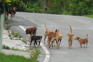 Θεσσαλονίκη: Ενημέρωση του δήμου για τα αδέσποτα σκυλιά