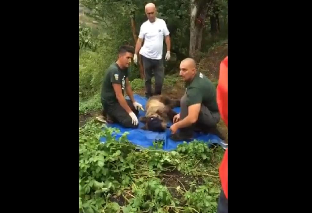 Ιωάννινα: Επιχείρηση διάσωσης για παγιδευμένο αρκουδάκι (VIDEO)