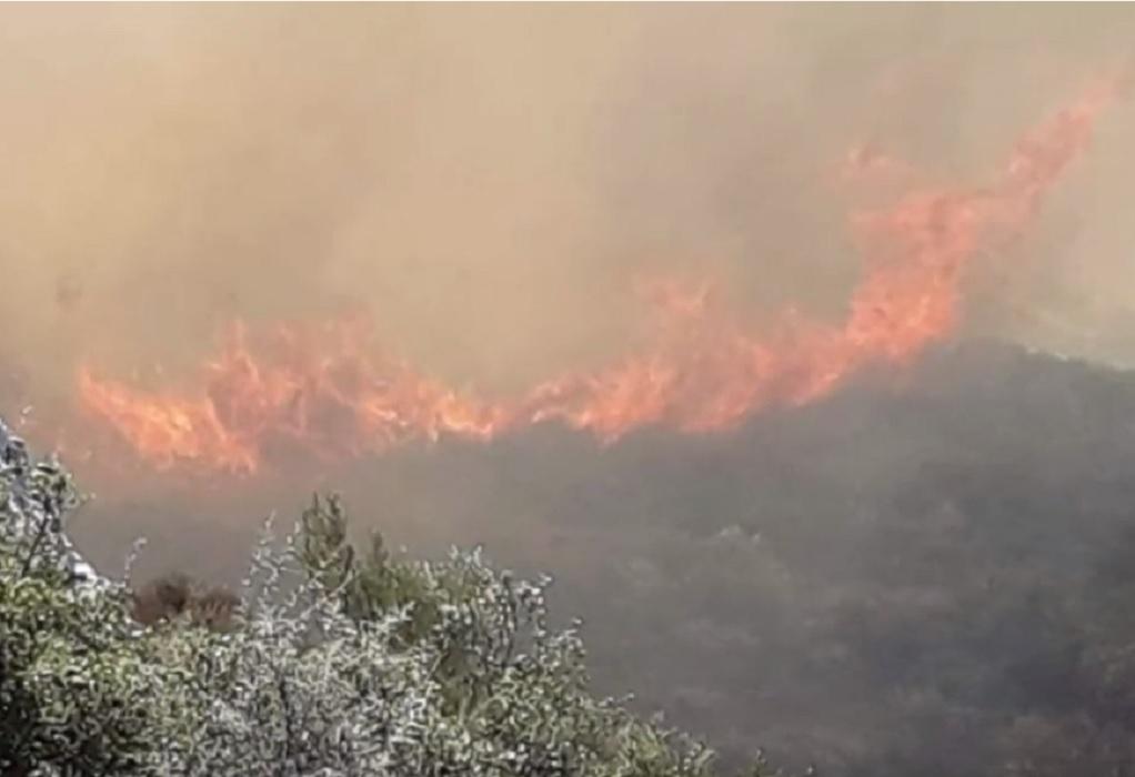Πάνω από 10.000 στρέμματα κάηκαν σε Ζάκυνθο και Λουτράκι από τις πρόσφατες πυρκαγιές