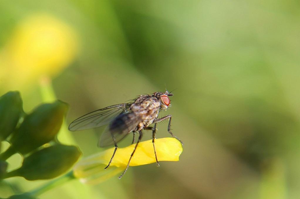 Έντομα στο σπίτι: Πώς να τα διώξετε χωρίς επικίνδυνες χημικές ουσίες