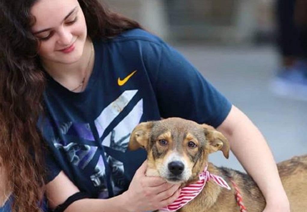 Βουλγαρία: Αύξηση υιοθεσιών αδέσποτων ζώων