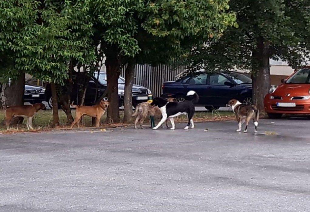 Νοσοκομείο Κιλκίς: Τρόμος από τα αδέσποτα σκυλιά (ΦΩΤΟ)